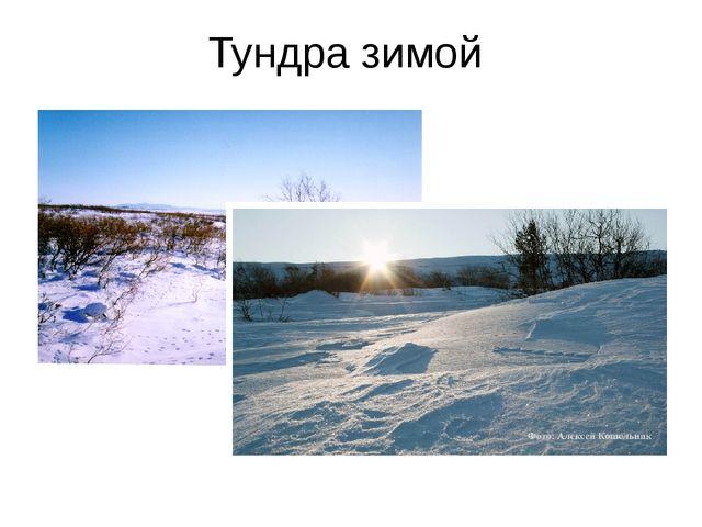 Тундра зимой