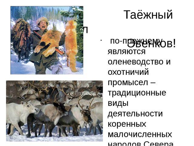 Таёжный промысел Эвенков! по-прежнему являются оленеводство и охотничий про...