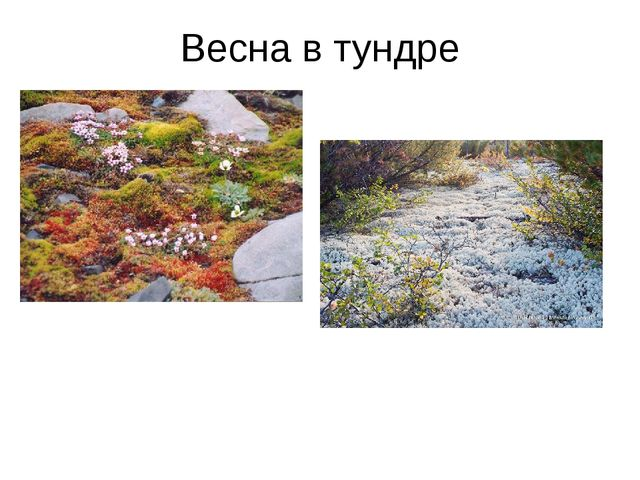 Весна в тундре