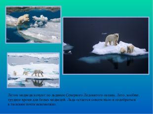 Летом медведи кочуют по льдинам Северного Ледовитого океана. Лето, вообще, тр