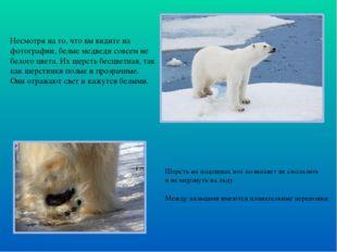 Шерсть на подошвах ног позволяет не скользить и не мерзнуть на льду. Между па