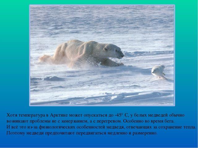 Хотя температура в Арктике может опускаться до -45° С, у белых медведей обычн...