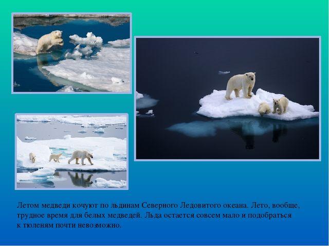Летом медведи кочуют по льдинам Северного Ледовитого океана. Лето, вообще, тр...