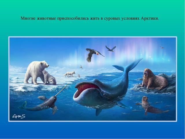 Многие животные приспособились жить в суровых условиях Арктики.