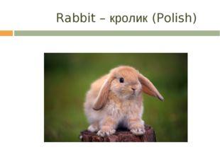 Rabbit – кролик (Polish)