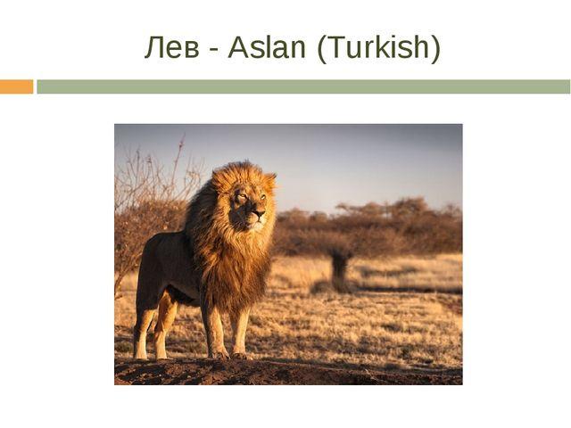 Лев - Aslan (Turkish)