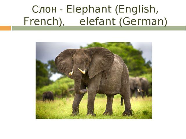 Слон - Elephant (English, French), elefant (German)