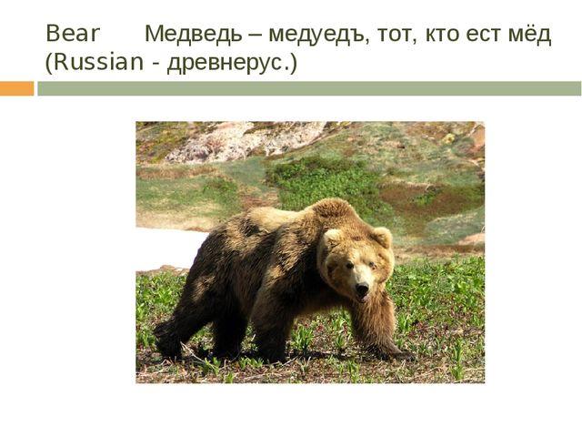 Bear Медведь – медуедъ, тот, кто ест мёд (Russian - древнерус.)