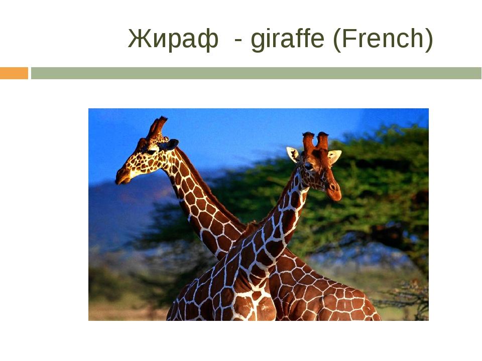 Жираф - giraffe (French)