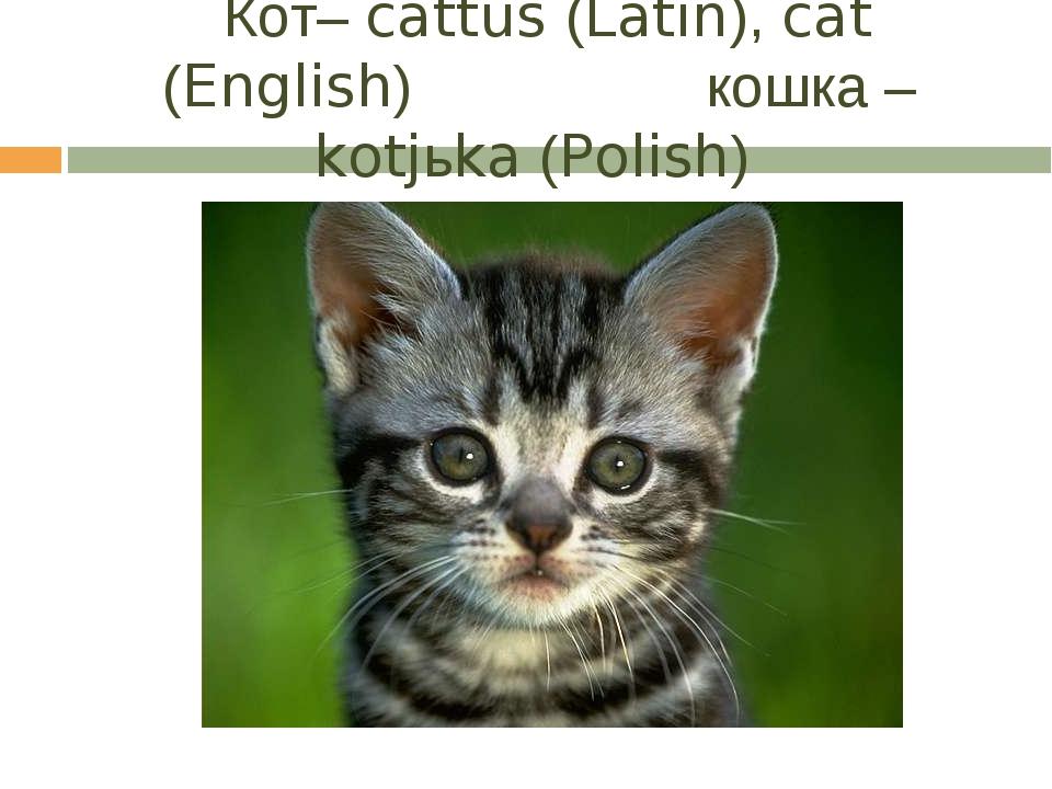Кот– cattus (Latin), cat (English) кошка – kotjьka (Polish)