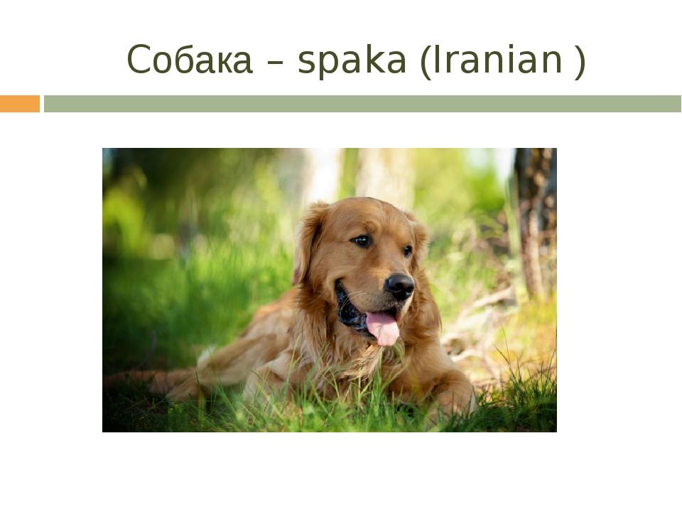 Cобака – spaka (Iranian )