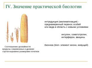 IV. Значение практической биологии Соотношение урожайности кукурузы современн