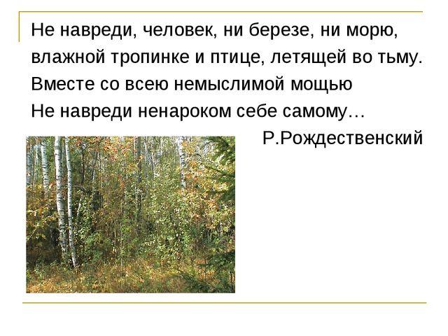 Не навреди, человек, ни березе, ни морю, влажной тропинке и птице, летящей во...