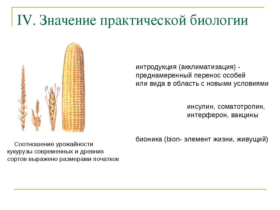 IV. Значение практической биологии Соотношение урожайности кукурузы современн...