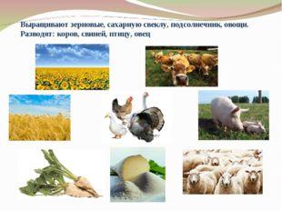 Выращивают зерновые, сахарную свеклу, подсолнечник, овощи. Разводят: коров, с