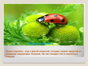 Божья коровка – жук с яркой окраской, которая служит защитой от поедания хищн