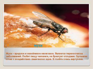 Муха – вредное и назойливое насекомое. Является переносчиком заболеваний. Люб