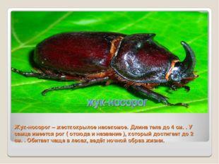 Жук-носорог – жесткокрылое насекомое. Длина тела до 4 см. . У самца имеется р
