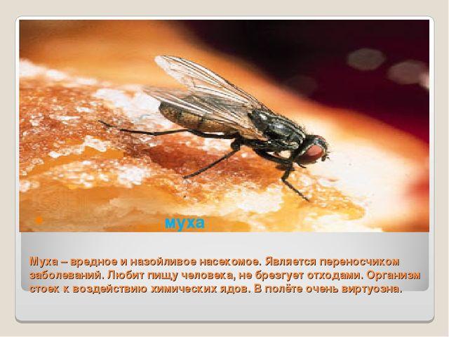 Муха – вредное и назойливое насекомое. Является переносчиком заболеваний. Люб...