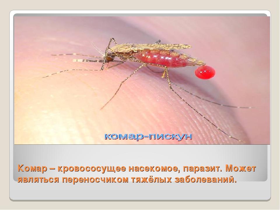 Комар – кровососущее насекомое, паразит. Может являться переносчиком тяжёлых...