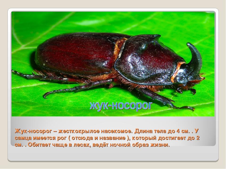Жук-носорог – жесткокрылое насекомое. Длина тела до 4 см. . У самца имеется р...