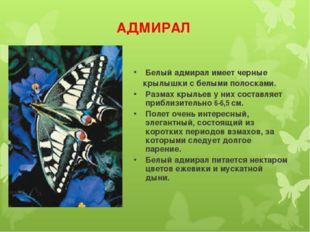 АДМИРАЛ Белый адмирал имеет черные крылышки с белыми полосками. Размах крылье