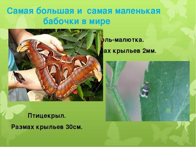 Самая большая и самая маленькая бабочки в мире Моль-малютка. Размах крыльев...
