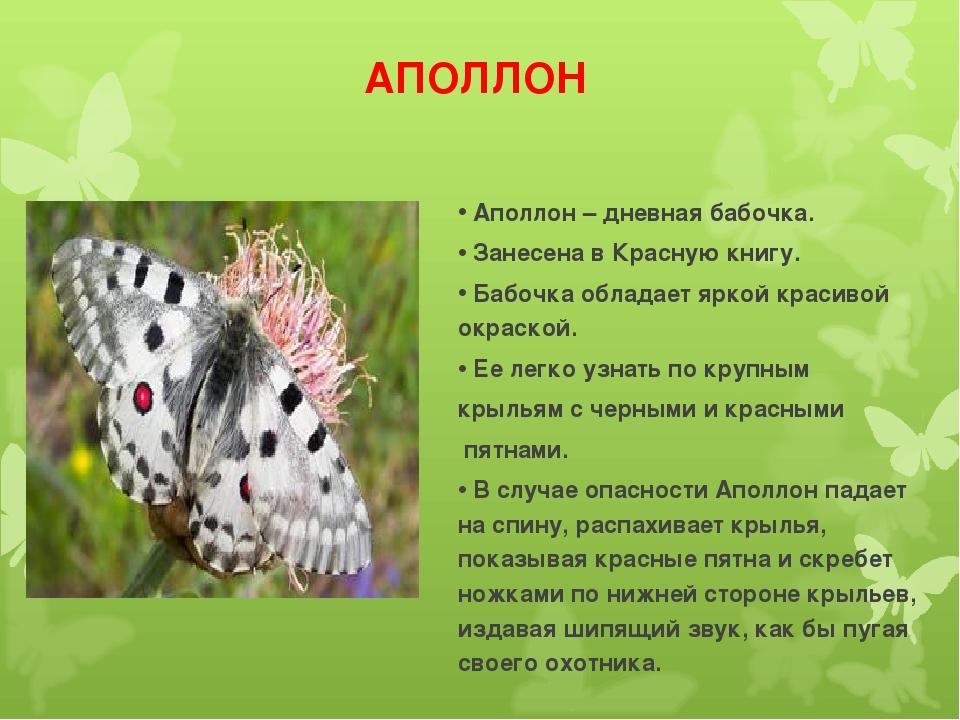 АПОЛЛОН Аполлон – дневная бабочка. Занесена в Красную книгу. Бабочка обладает...