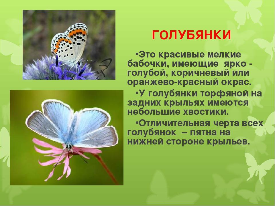 ГОЛУБЯНКИ Это красивые мелкие бабочки, имеющие ярко - голубой, коричневый ил...