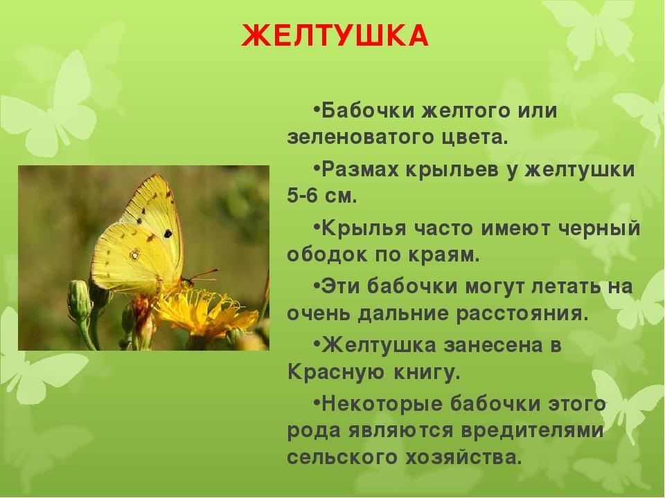ЖЕЛТУШКА Бабочки желтого или зеленоватого цвета. Размах крыльев у желтушки 5-...