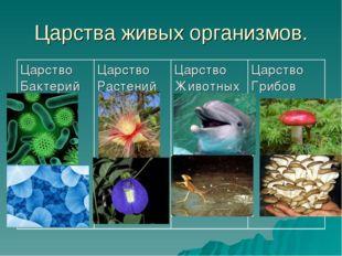 Царства живых организмов. Царство БактерийЦарство РастенийЦарство Животных