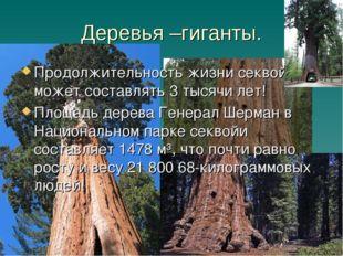 Деревья –гиганты. Продолжительность жизни секвойи может составлять 3 тысячи л