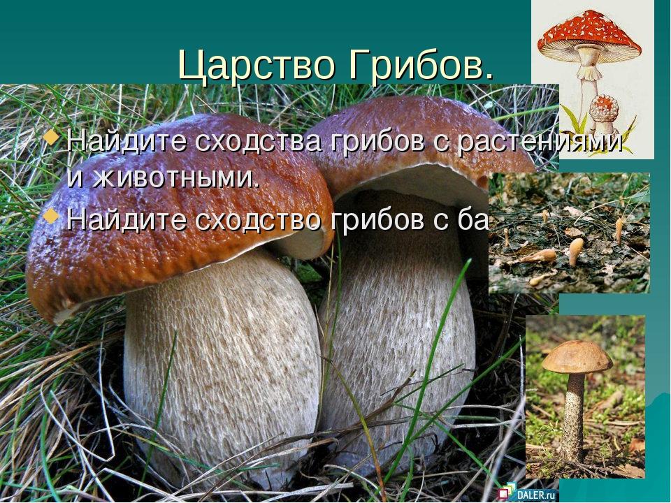 Царство Грибов. Найдите сходства грибов с растениями и животными. Найдите схо...