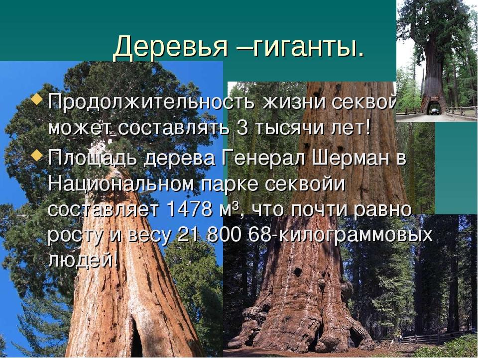 Деревья –гиганты. Продолжительность жизни секвойи может составлять 3 тысячи л...
