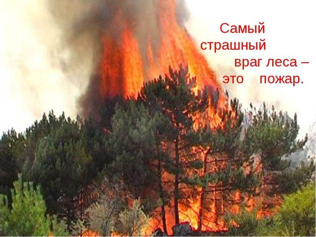 Самый страшный враг леса – это пожар.