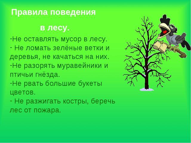 Правила поведения в лесу. Не оставлять мусор в лесу. Не ломать зелёные ветки...