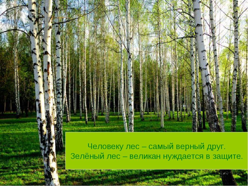 Человеку лес – самый верный друг. Зелёный лес – великан нуждается в защите.