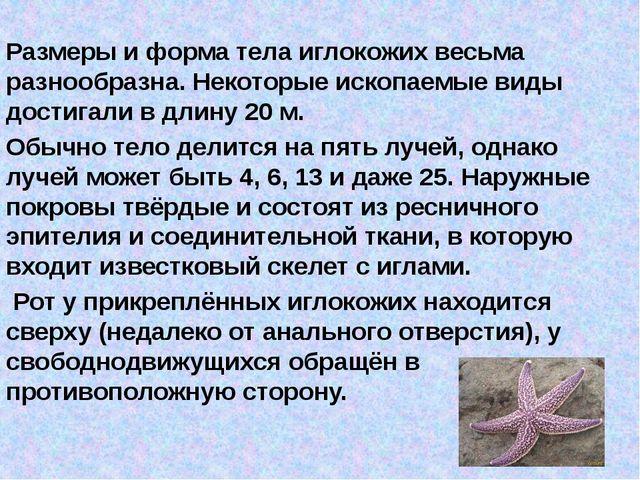 Размеры и форма тела иглокожих весьма разнообразна. Некоторые ископаемые виды...