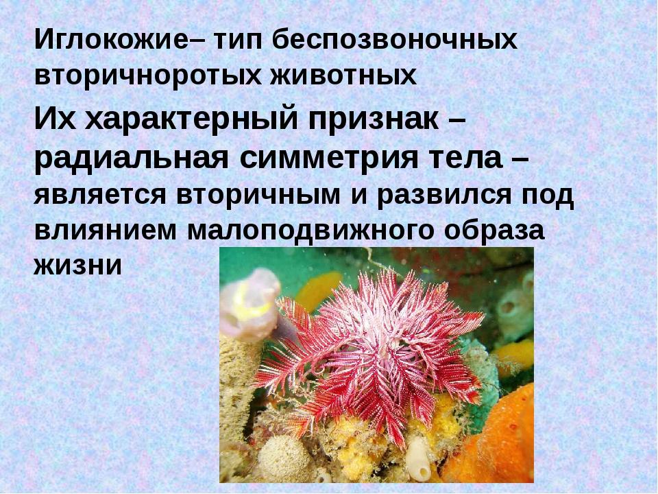 Иглокожие– тип беспозвоночных вторичноротых животных Их характерный признак –...