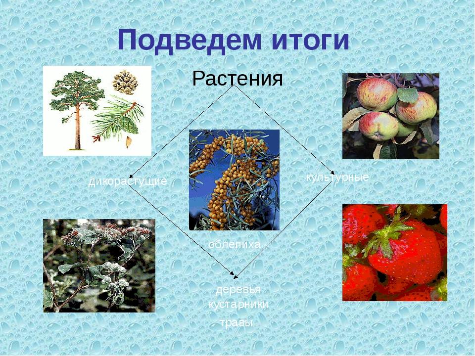Подведем итоги Растения культурные дикорастущие деревья травы кустарники обле...