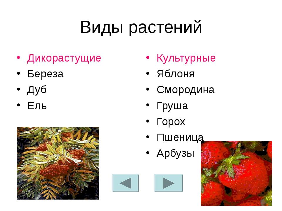 Виды растений Дикорастущие Береза Дуб Ель Культурные Яблоня Смородина Груша Г...