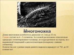 Длина многоножек колеблется в диапазоне от 2мм до 35 см. Голова состоит из 4
