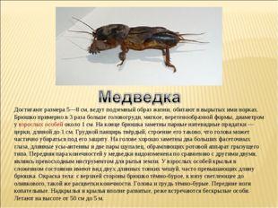 Достигают размера 5—8 см, ведут подземный образ жизни, обитают в вырытых ими