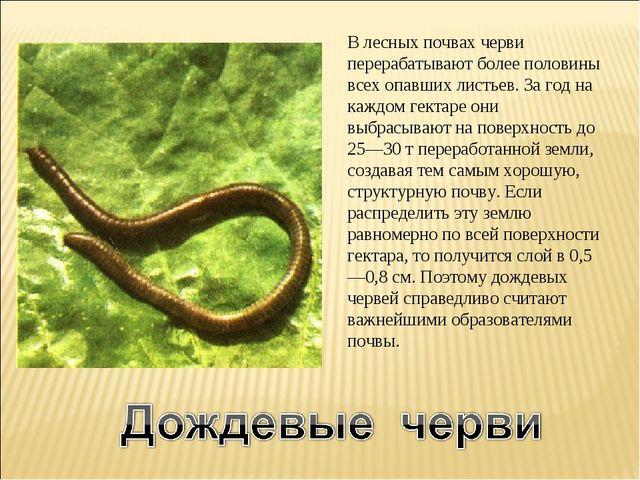 В лесных почвах черви перерабатывают более половины всех опавших листьев. За...