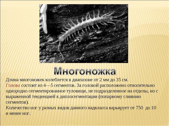 Длина многоножек колеблется в диапазоне от 2мм до 35 см. Голова состоит из 4...