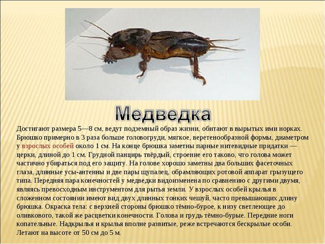 Достигают размера 5—8 см, ведут подземный образ жизни, обитают в вырытых ими...
