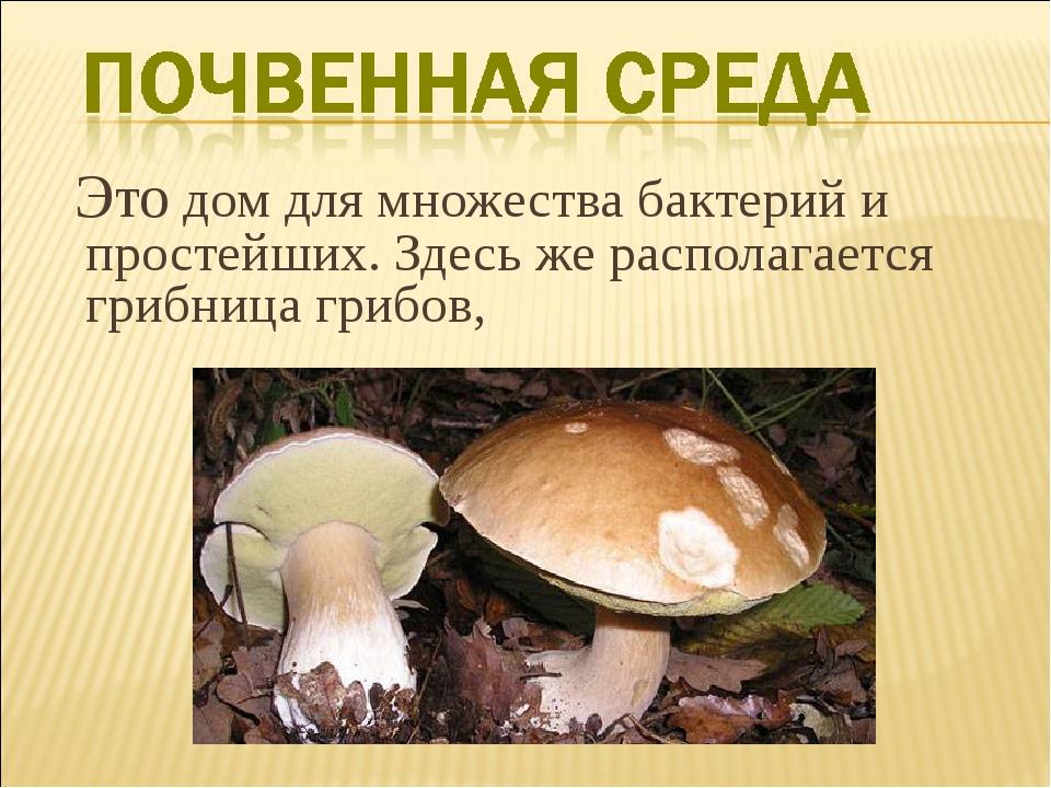 Это дом для множества бактерий и простейших. Здесь же располагается грибница...