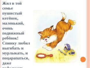 Жил в той семье пушистый котёнок, маленький, очень подвижный ребёнок! Спинку