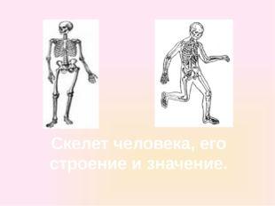 Скелет человека, его строение и значение.