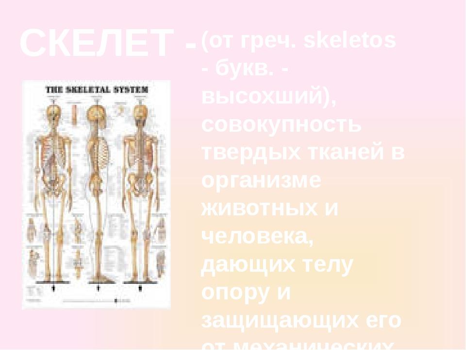 СКЕЛЕТ - (от греч. skeletos - букв. - высохший), совокупность твердых тканей...